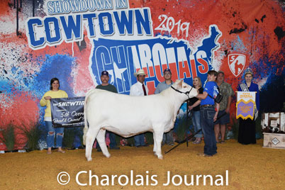 American International Charolais Association | JUNIOR NEWS & UPDATES
